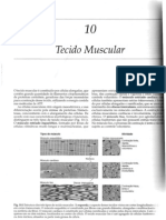 Tecido Muscular (Profª Maria Paula)
