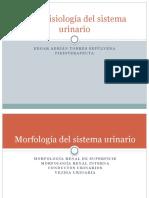Morfofisiología del sistema urinario