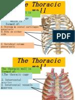 Thorax  1.pptx