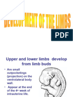 Development of the Limbs2
