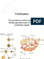 Fertilization,embryo