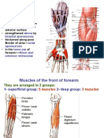 Front of Forearm Lectures