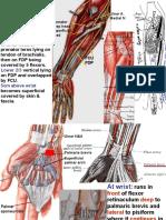 Ulnar Artery