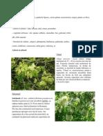Vegetatia Si Fauna