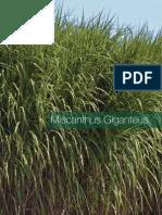 Brochure Miscanthus en Low Res