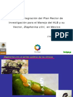 Diaphorina citri en México - HBL