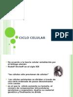 ciclo celular 2