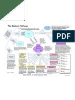 Bio Toxin Pathway