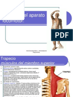 Músculos by ariel gonzalez barra