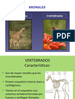 Ppt Animales Vertebrados e Invertebrados