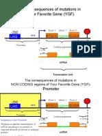 Translation Mutations Molecular Biology