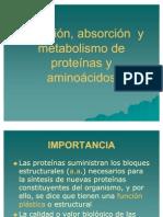 Digestion y Metabolismo de Proteinas y Aminoacidos