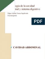 Morfología cavidad abdominal y sistema digestivo