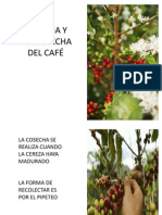 COSECHA Y POSCOSECHA  DEL CAFÉ