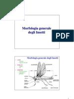 02. Morfologia generale