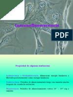 Inmunofluorescencia2