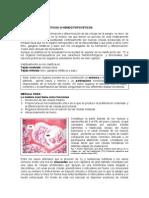 Organos Hemopoyeticos