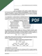 07 Tema 7 Respiracion Celular y Fotosintesis1