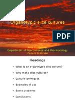 Organ Culture