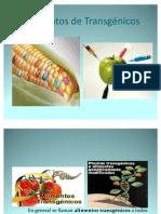 Alimentos de TransgénicosB