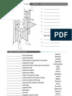 Quiz Anatomical Terms