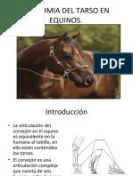 Anatomai Del Tarso en Equinos Miguel