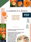 Expo Zanahoria (1)