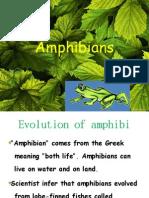 Amphibians NYIT NYIT
