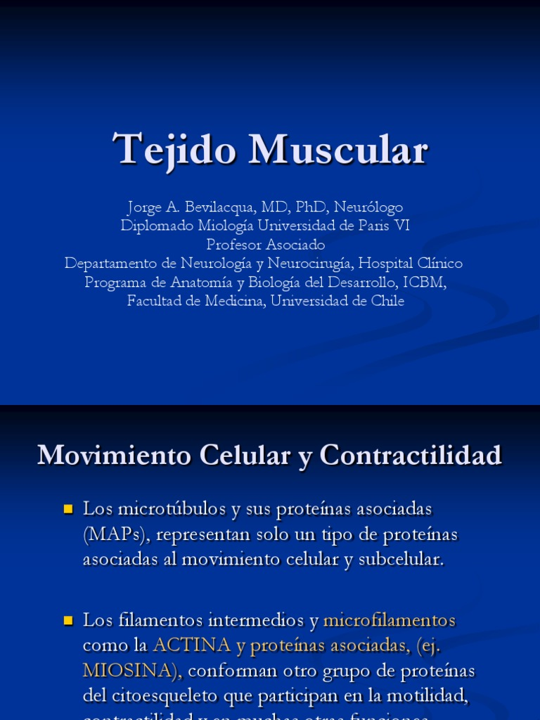 Asombroso Anatomía De Panis Modelo - Imágenes de Anatomía Humana ...