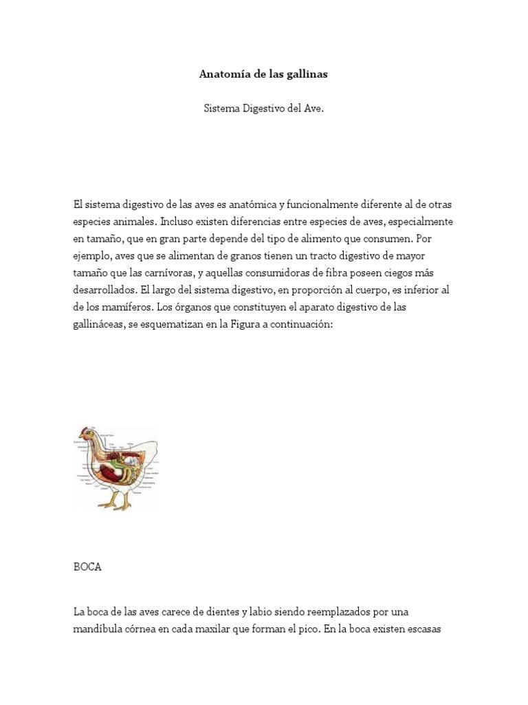 Anatomía de las gallinas