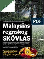 """""""Malaysias regnskog skövlas"""", för Impuls"""