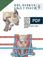 Tiroides y Funcion Tiroidea (Grupo 2)