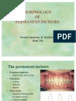 Morphology of Permanent Incisors