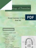 Morphology of Premolars