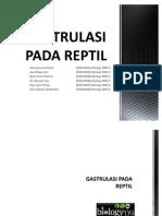 GASTRULASI PADA REPTIL