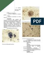 Parasitologia 2º prova