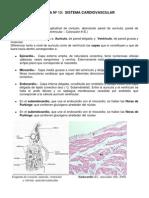 Guia de Morfo- Histologia