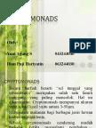 CRYPTOMONADS N HAPTOPHYTA