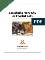 Cat Socialization