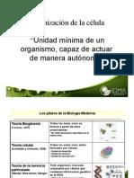 Microsoft Power Point - Clase 2 Celula Organelos 2011
