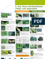 Asian Baby Leaf IPM Poster