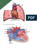 cardiovaskular