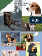 Razas Caninas Grupo VI
