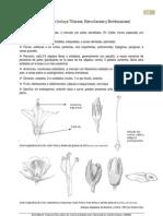 3-Malvaceae