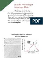 Bi 140 Ch05 Path to Gene Expression Part 2