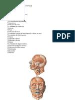 amatomia musculos face e pescoço