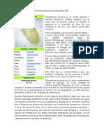 Paramecium Bursaria Chlorella