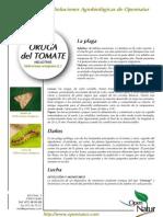 Helicoverpa Armiguera Oruga Del Tomate Heliotis Esp