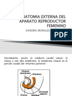 Anatomia Externa Del Aparato Re Product Or Femenino