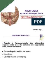 Aula08 Sistema Nervoso Introducao
